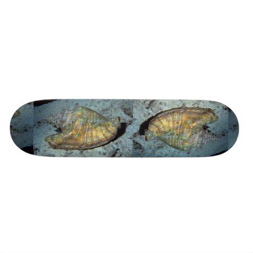 Conque de reine (gigas de Strombus) Shell Planche À Roulette