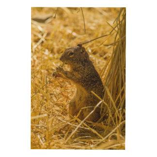 Consommation d'écureuil de roche impression sur bois