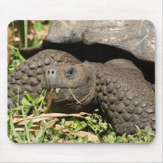 Consommation | Galapagos de tortue géante Tapis De Souris