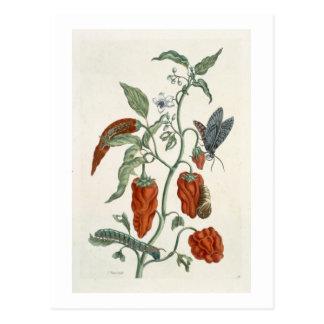 """Consoude, """"d'un de fines herbes curieux"""", 1782 carte postale"""