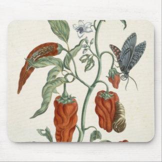 """Consoude, """"d'un de fines herbes curieux"""", 1782 (l' tapis de souris"""