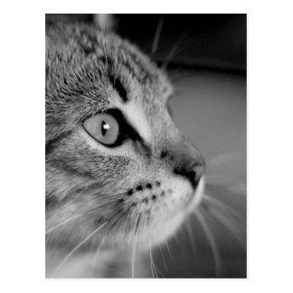 Contemplation mignonne noire et blanche de chat carte postale