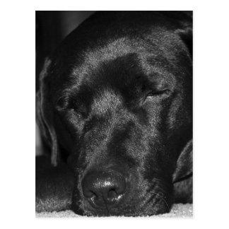 Contenu, sommeil Labrador noir Carte Postale