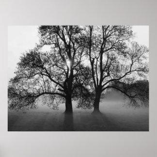 COPIE - 2 grands arbres noir et blanc Posters