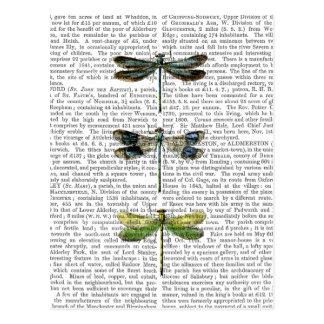 Copie 3 de libellules carte postale