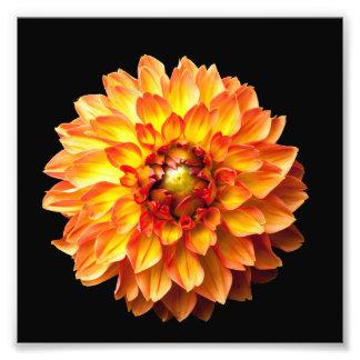 Copie 6x6in de fleur de dahlia impression photo