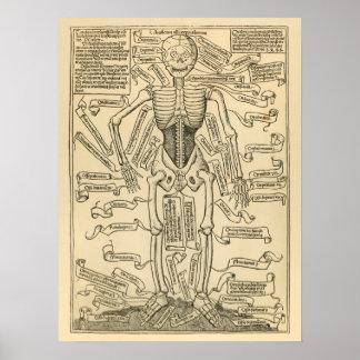 Copie allemande vintage d'anatomie des os poster