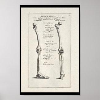 Copie artistique d'art de 1691 d'anatomie os de poster