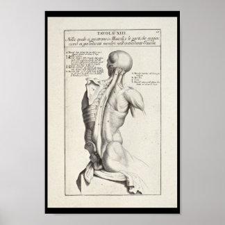 Copie artistique d'art de 1691 muscles du dos poster