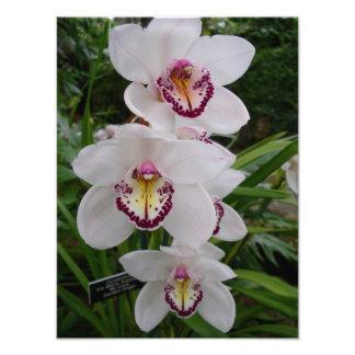Copie blanche de photo d'orchidées