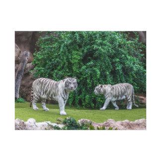 Copie blanche de toile de tigres