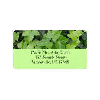 Copie botanique de lierre vert étiquettes d'adresse