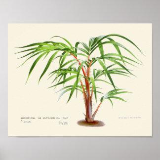 Copie botanique de paume vintage poster