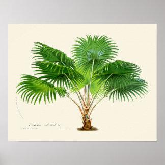 Copie botanique de paume vintage posters