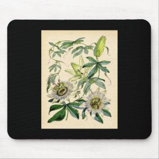 Copie botanique - fleur de passion (passiflore) tapis de souris
