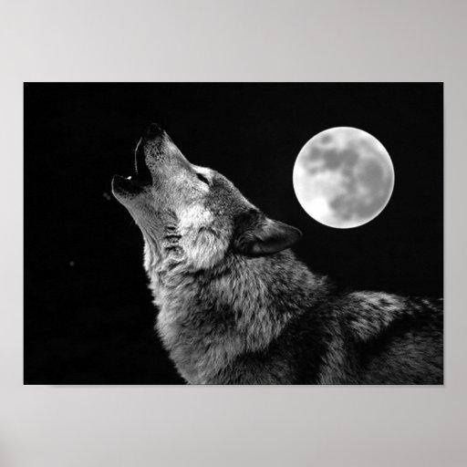 Copie d'affiche de loup gris et de lune