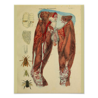 Copie d'art d'anatomie d'abeilles d'artères de poster