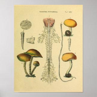 Copie d'art de champignons d'anatomie de nerfs poster