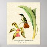 Copie d'art de colibri couronnée par azur poster