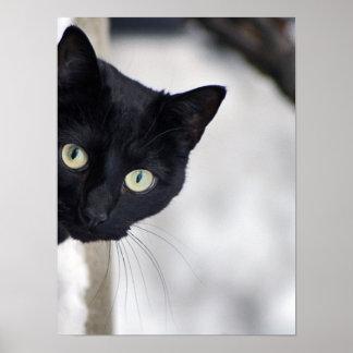 Copie de chat noir posters