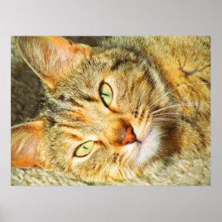 Copie de chat affiches