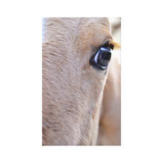 Copie de cheval sur la toile