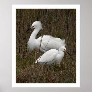 Copie de deux de héron d'oiseaux animaux de faune posters