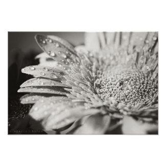 Copie de fleur noire et blanche et de photo de