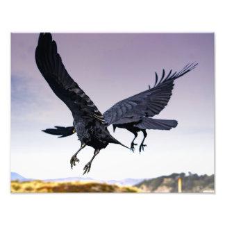 Copie de la photo de Raven en vol ensemble