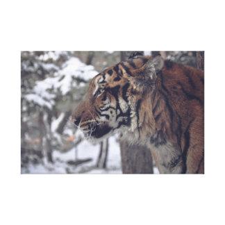 Copie de mur de toile de tigre