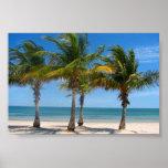 Copie de palmiers de la Floride Posters