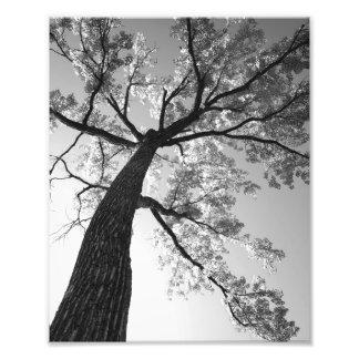 Copie de photo de l'arbre le plus grand