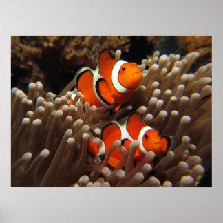 Copie de poissons de clown de Nemo Posters