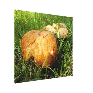 Copie de toile - champignons toiles