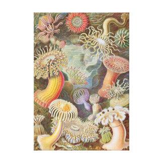 Copie de toile d'actinies de Haeckel