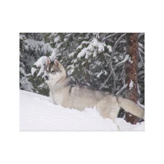 Copie de toile de chien de traîneau sibérien