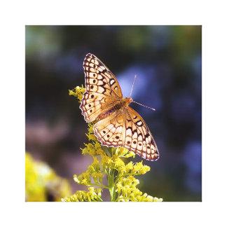 Copie de toile de papillon