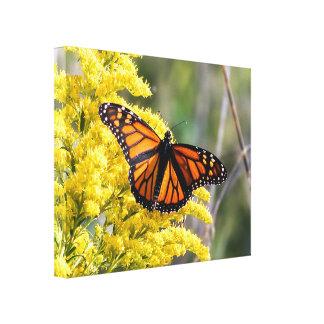 Copie de toile de papillon de monarque