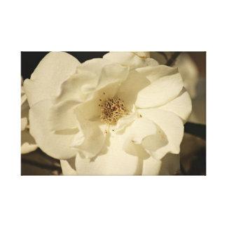Copie de toile de rose blanc