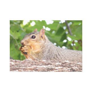 Copie de toile d'écureuil