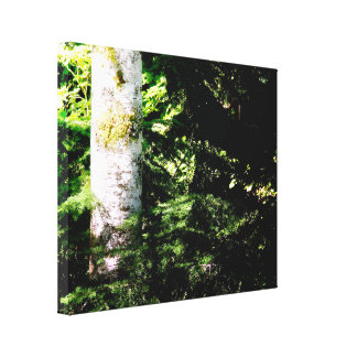Copie de toile d'étendue de lueur de forêt