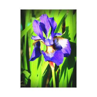 Copie de toile étirée par iris sibérien