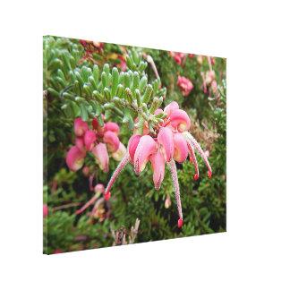 Copie de toile - Grevillia rose Toiles