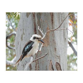 Copie de toile - Kookaburra Toiles