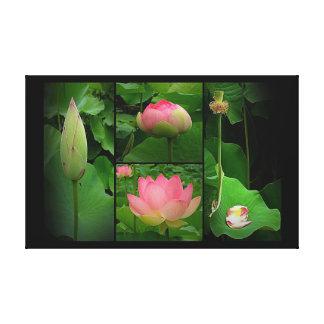 Copie de toile - la vie d'une fleur de Lotus Toiles