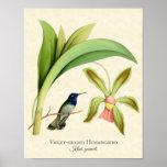 Copie dirigée violette d'art de colibri poster