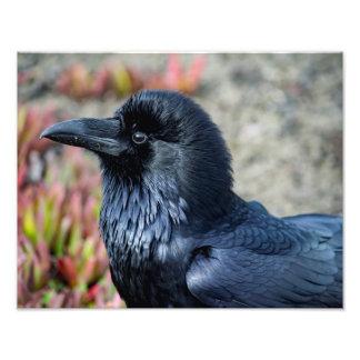 Copie élégante de photo de Raven