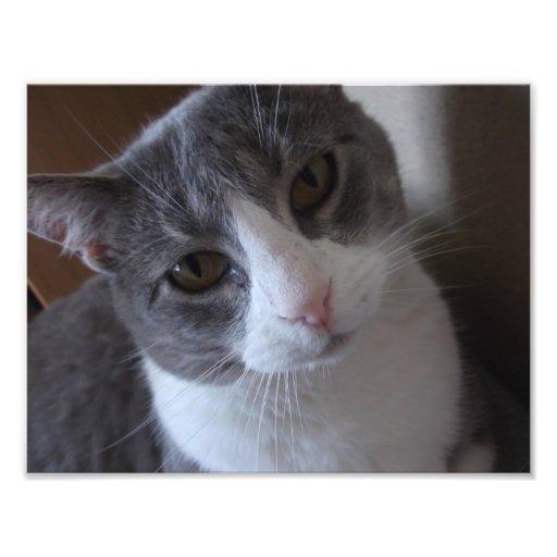 Copie grise et blanche de chat art photographique