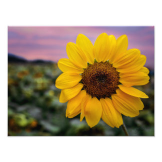 Copie heureuse de tournesol impression photo