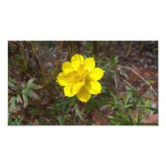 Copie jaune simple de photo de fleur